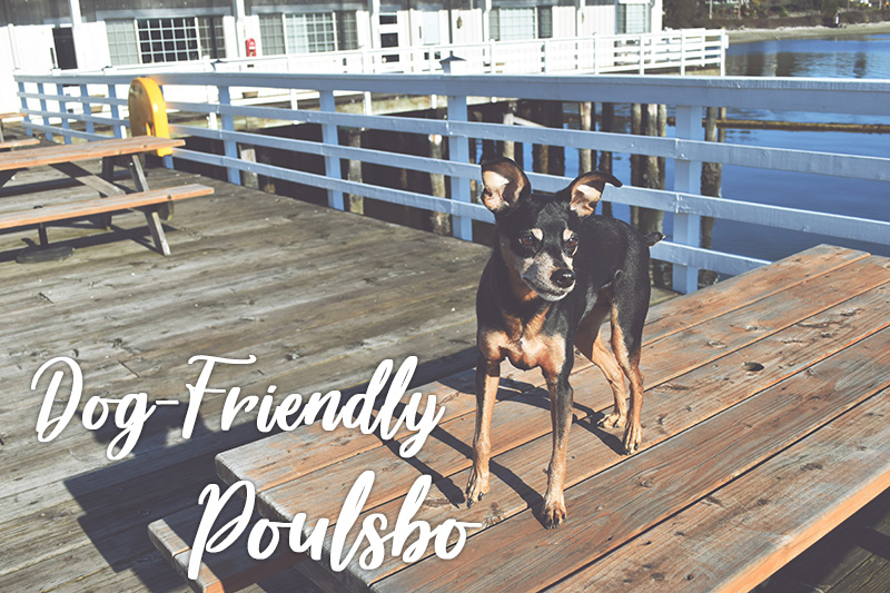 A Dog-Friendly Getaway in Poulsbo
